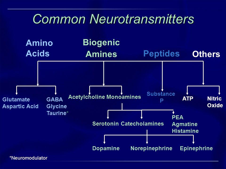 ATPNitric Oxide Substance P Biogenic Amines Amino Acids Peptides Others AcetylcholineMonoamines SerotoninCatecholamines Norepinephrine Dopamine Epinep
