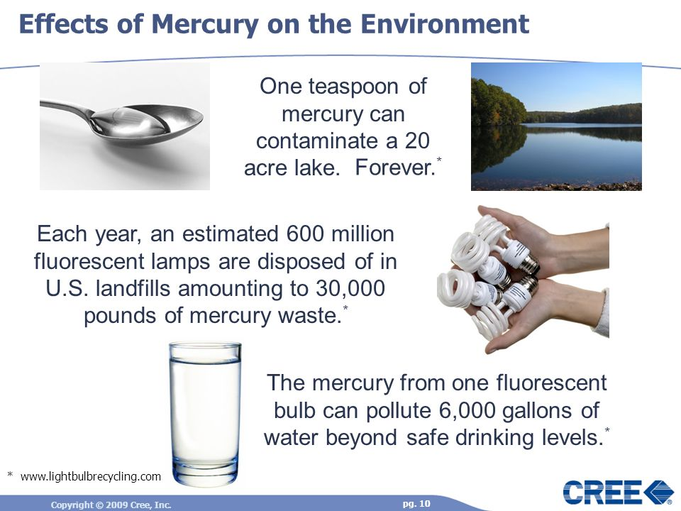 Copyright © 2009 Cree, Inc. pg. 10 One teaspoon of mercury can contaminate a 20 acre lake.. Effects of Mercury on the Environment * www.lightbulbrecyc