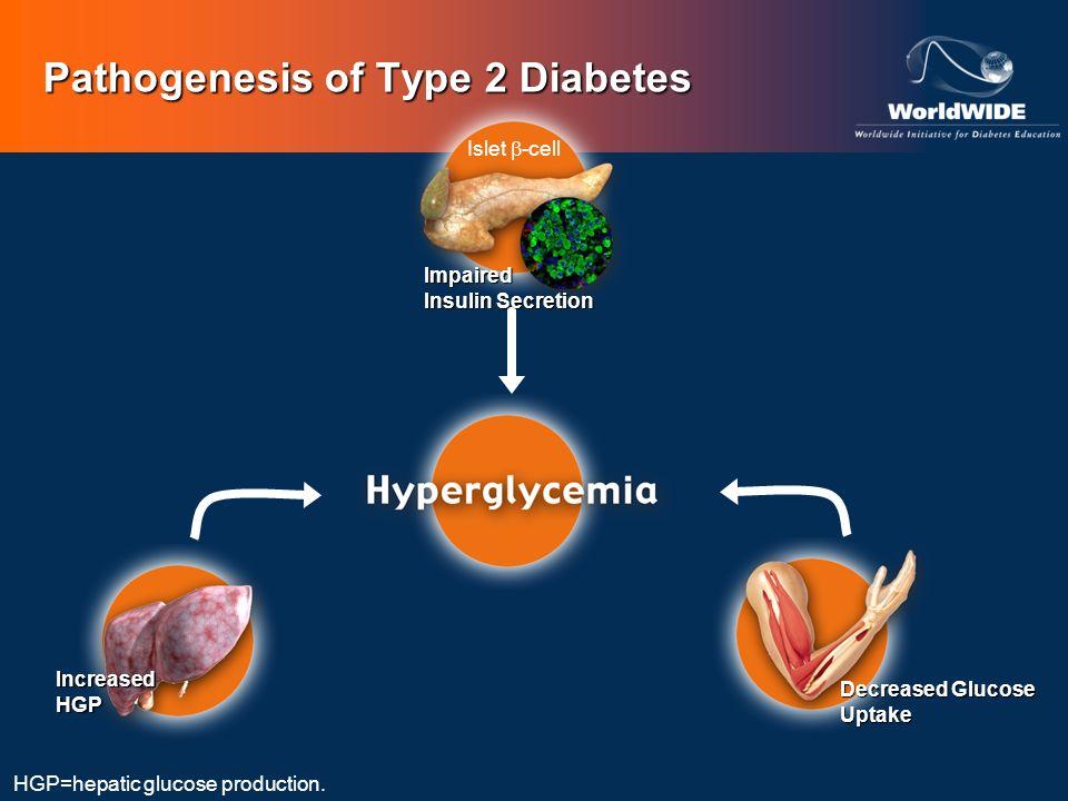 Pathogenesis of Type 2 Diabetes HGP=hepatic glucose production. Islet -cell Impaired Insulin Secretion IncreasedHGP Decreased Glucose Uptake