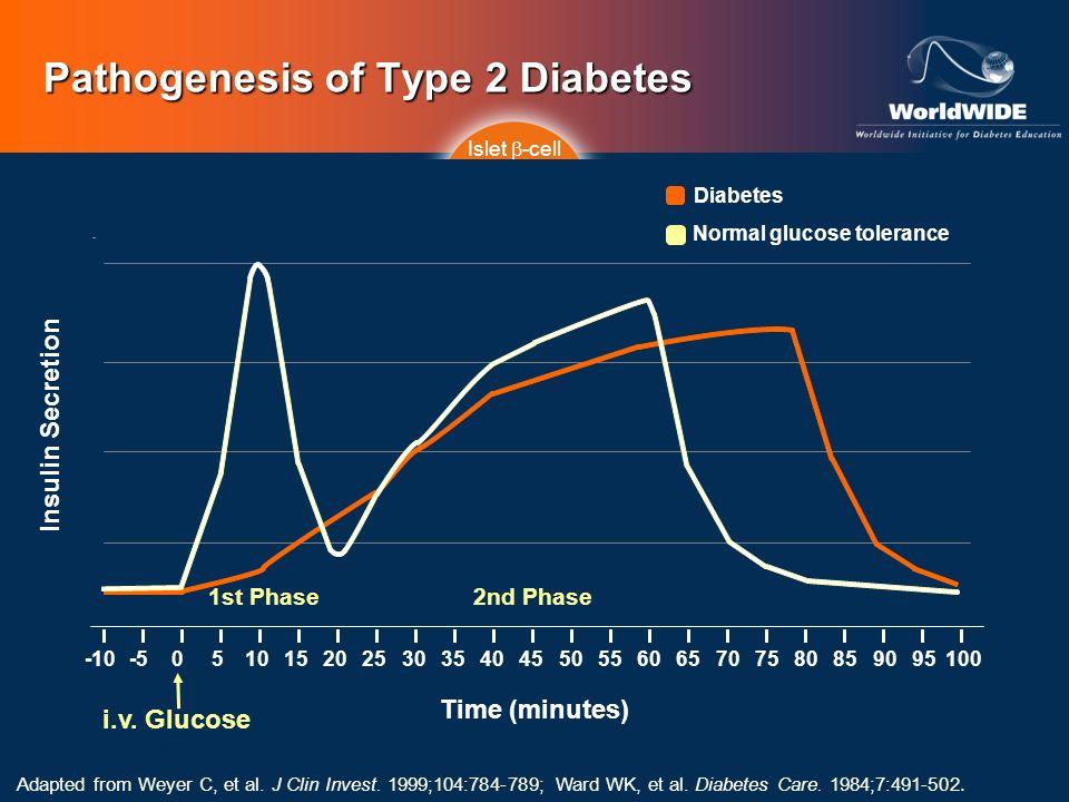 Pathogenesis of Type 2 Diabetes HGP=hepatic glucose production. Islet -cell Impaired Insulin Secretion IncreasedHGP Decreased Glucose Uptake Time (min