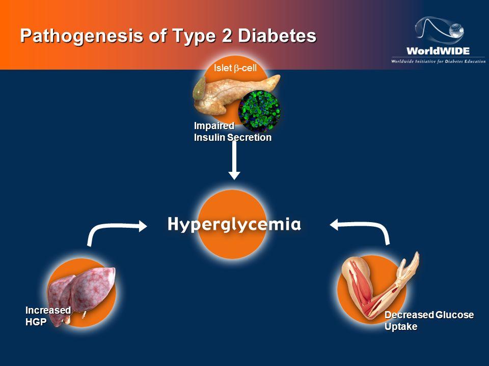 Pathogenesis of Type 2 Diabetes Islet -cell Impaired Insulin Secretion IncreasedHGP Decreased Glucose Uptake