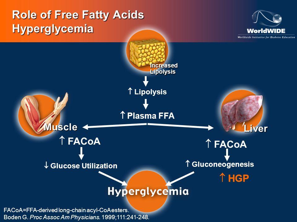 FACoA Gluconeogenesis Glucose Utilization Lipolysis Plasma FFA HGP Role of Free Fatty Acids Hyperglycemia HGP Muscle Liver FACoA=FFA-derived long-chai