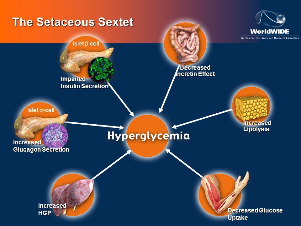 The Setaceous Sextet Decreased Glucose Uptake IncreasedLipolysis IncreasedHGP Islet -cell Increased Glucagon Secretion Decreased Incretin Effect Islet