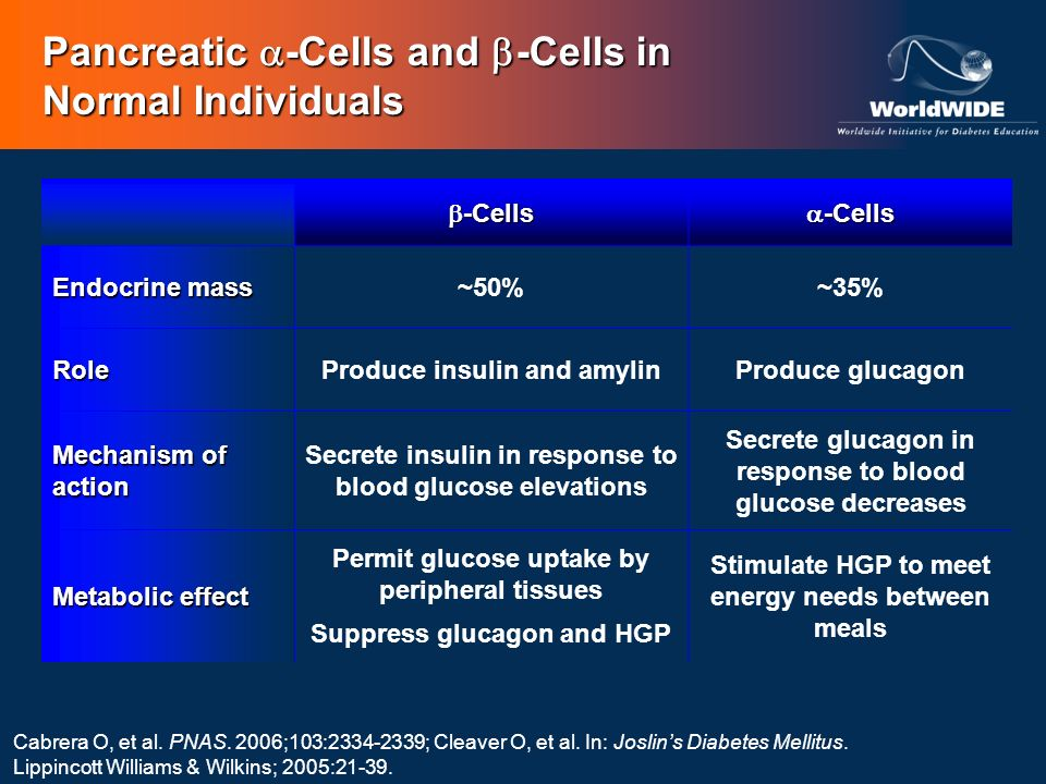 Pancreatic -Cells and -Cells in Normal Individuals Cabrera O, et al. PNAS. 2006;103:2334-2339; Cleaver O, et al. In: Joslins Diabetes Mellitus. Lippin
