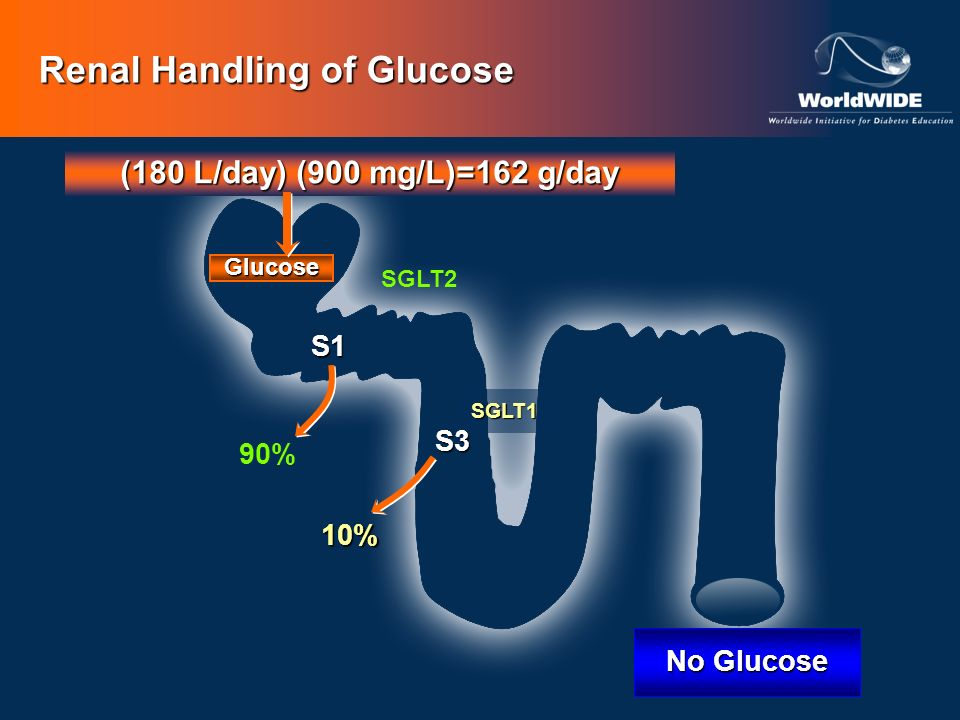 SGLT1 (180 L/day) (900 mg/L)=162 g/day 10% Glucose No Glucose S1 S3 Renal Handling of Glucose SGLT2 90%