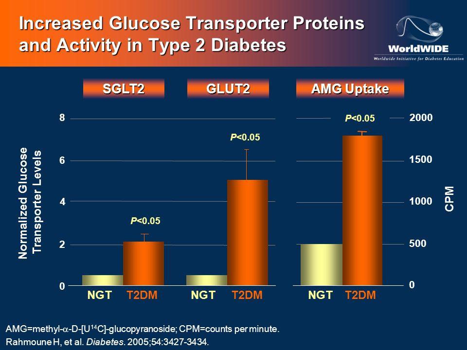 GLUT2 AMG Uptake NGTT2DMNGTT2DM AMG=methyl- -D-[U 14 C]-glucopyranoside; CPM=counts per minute. Rahmoune H, et al. Diabetes. 2005;54:3427-3434. SGLT2