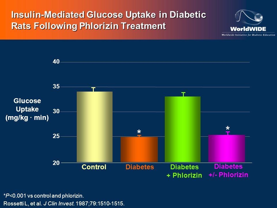 Glucose Uptake (mg/kg min) *P<0.001 vs control and phlorizin. Rossetti L, et al. J Clin Invest. 1987;79:1510-1515. Insulin-Mediated Glucose Uptake in
