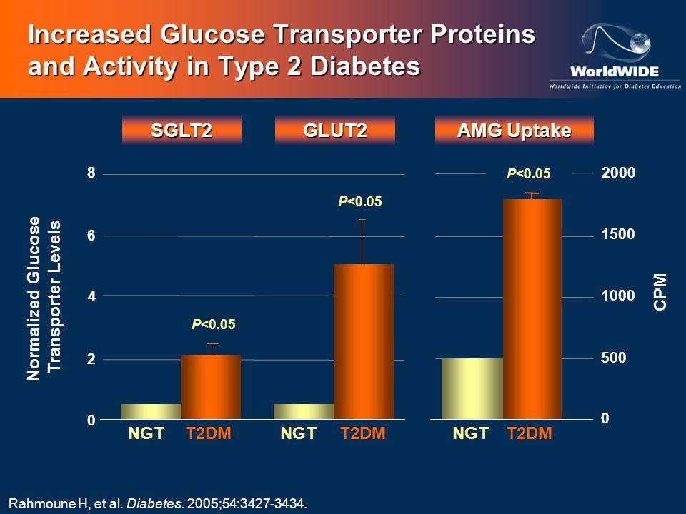 GLUT2 AMG Uptake NGTT2DMNGTT2DM Rahmoune H, et al. Diabetes. 2005;54:3427-3434. SGLT2 NGTT2DM 0 2 6 8 0 500 1000 1500 2000 Normalized Glucose Transpor