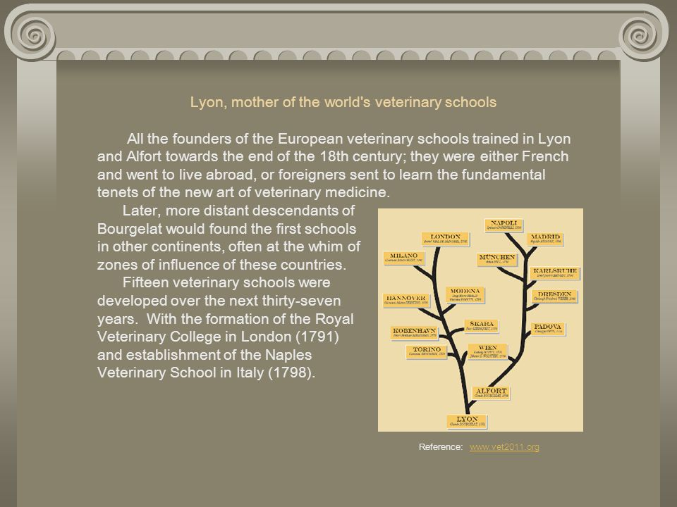 Lyon, mother of the world's veterinary schools All the founders of the European veterinary schools trained in Lyon and Alfort towards the end of the 1