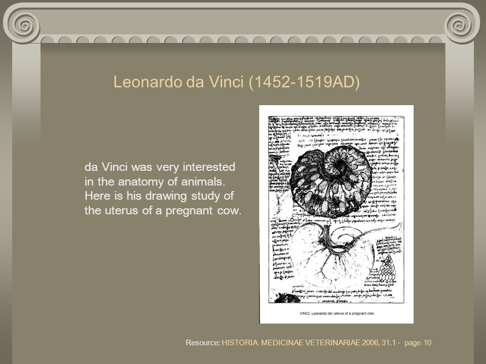 Leonardo da Vinci (1452-1519AD) da Vinci was very interested in the anatomy of animals. Here is his drawing study of the uterus of a pregnant cow. Res