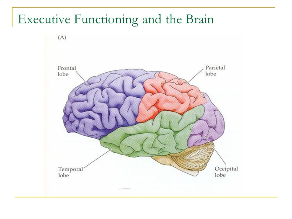 Teaching Children Executive Skills: Teaching Thinking and Organizational Skills in Addition to Content Knowledge Initially teachers become the frontal lobes for the child.
