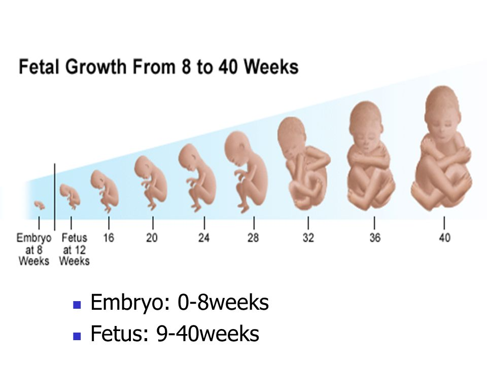The duration of pregnancy Gestational age: It is calculated from the first day of the last menstrual period (LMP, assuming a 28 day cycle) and expressed in completed age Fertilization age: the age of the offspring calculated from the time of fertilization