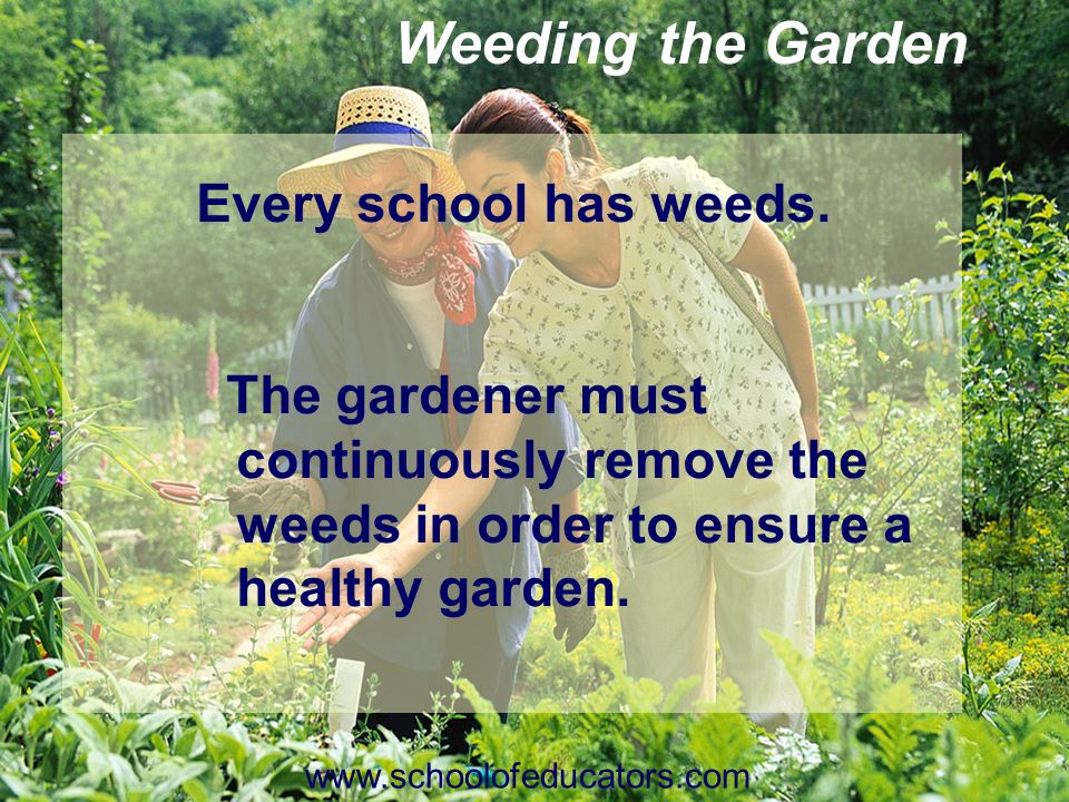 Weeding the Garden Every school has weeds. The gardener must continuously remove the weeds in order to ensure a healthy garden. www.schoolofeducators.