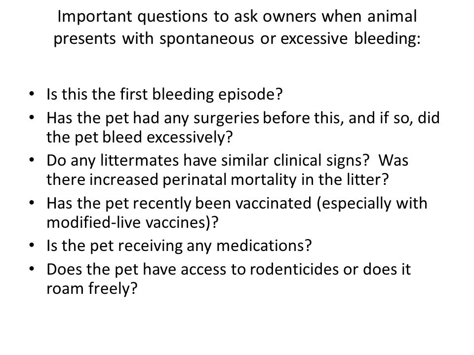 Important questions to ask owners when animal presents with spontaneous or excessive bleeding: Is this the first bleeding episode? Has the pet had any