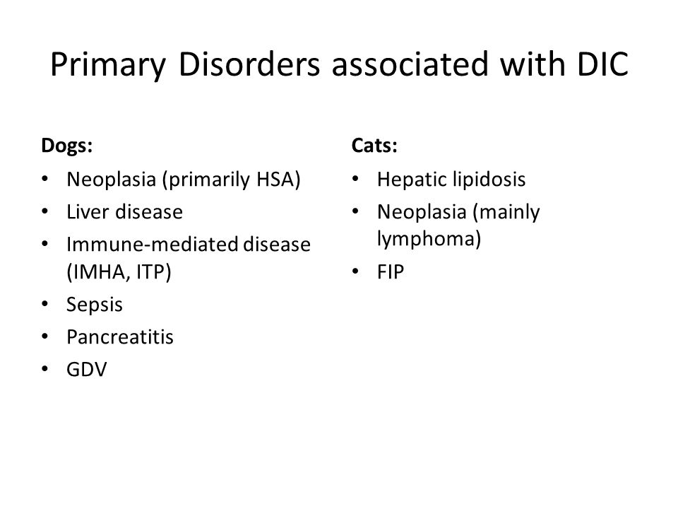 Primary Disorders associated with DIC Dogs: Neoplasia (primarily HSA) Liver disease Immune-mediated disease (IMHA, ITP) Sepsis Pancreatitis GDV Cats: