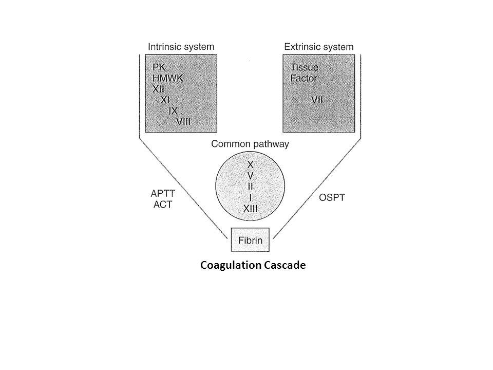 Nomenclature of clotting factors I – fibrinogen II – Prothrombin III – Tissue thromboplastin/tissue factor IV – Calcium V – Proacelerin VII – Proconvertin VIII – Hemophilia A (antihemophilic factor) IX – Hemophilia B (Christmas factor) X – Stuart-Prower factor XI – Plasma thromboplastin antecedent (PTA) XII – Hageman factor XIII – Fibrin stabilizing factor Prekallikrein/Fletcher factor High molecular weight kininogen (HMWK)/Fitzgerald factor