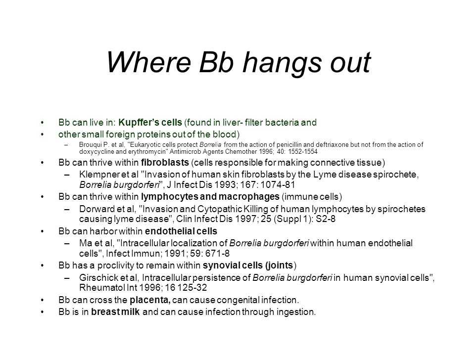 Where Bb hangs out Bb can live in: Kupffers cells (found in liver- filter bacteria and other small foreign proteins out of the blood) –Brouqui P. et a