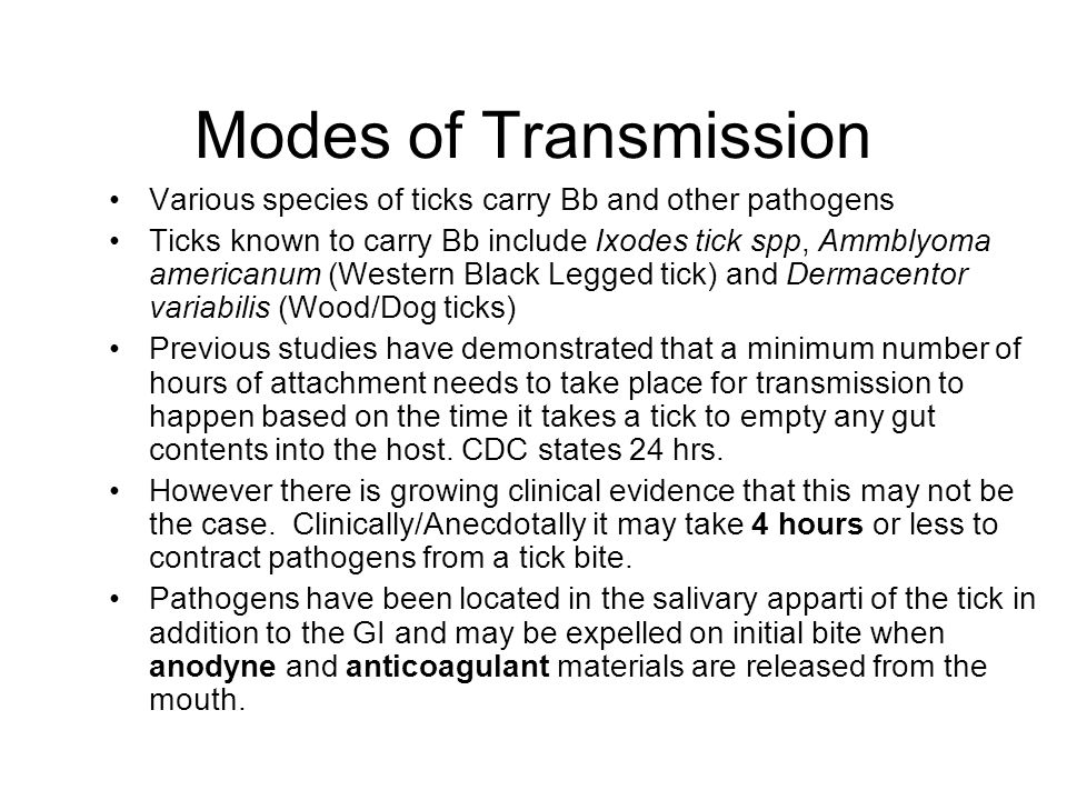 Modes of Transmission Various species of ticks carry Bb and other pathogens Ticks known to carry Bb include Ixodes tick spp, Ammblyoma americanum (Wes