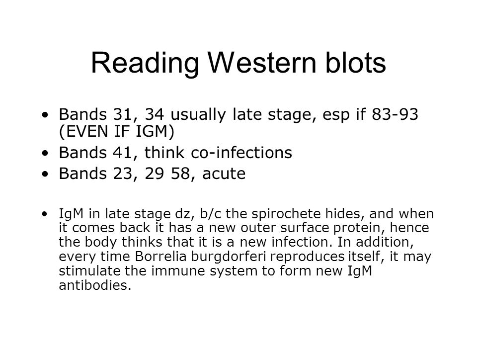 Reading Western blots Bands 31, 34 usually late stage, esp if 83-93 (EVEN IF IGM) Bands 41, think co-infections Bands 23, 29 58, acute IgM in late sta