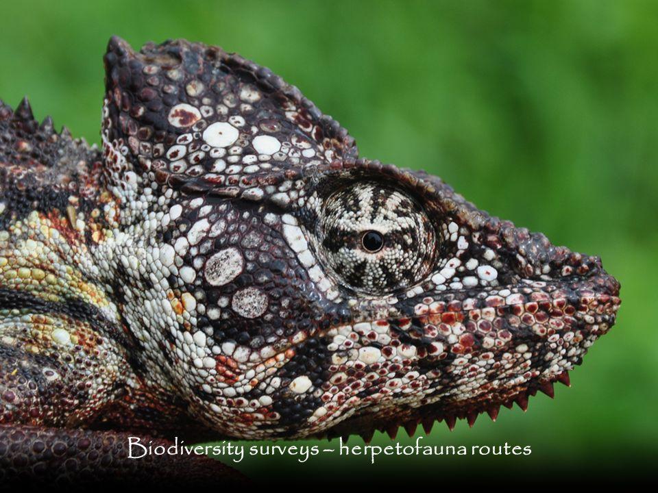 Biodiversity surveys – herpetofauna routes