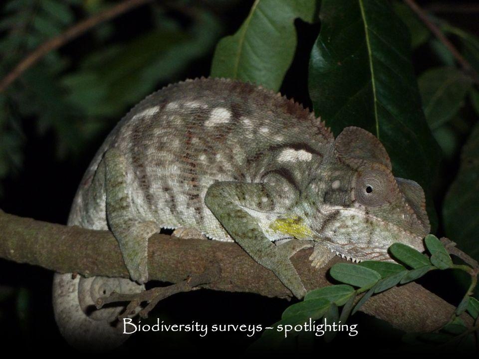 Biodiversity surveys – spotlighting