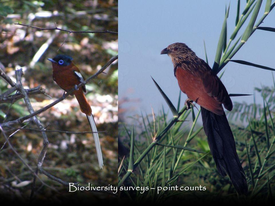 Biodiversity surveys – point counts