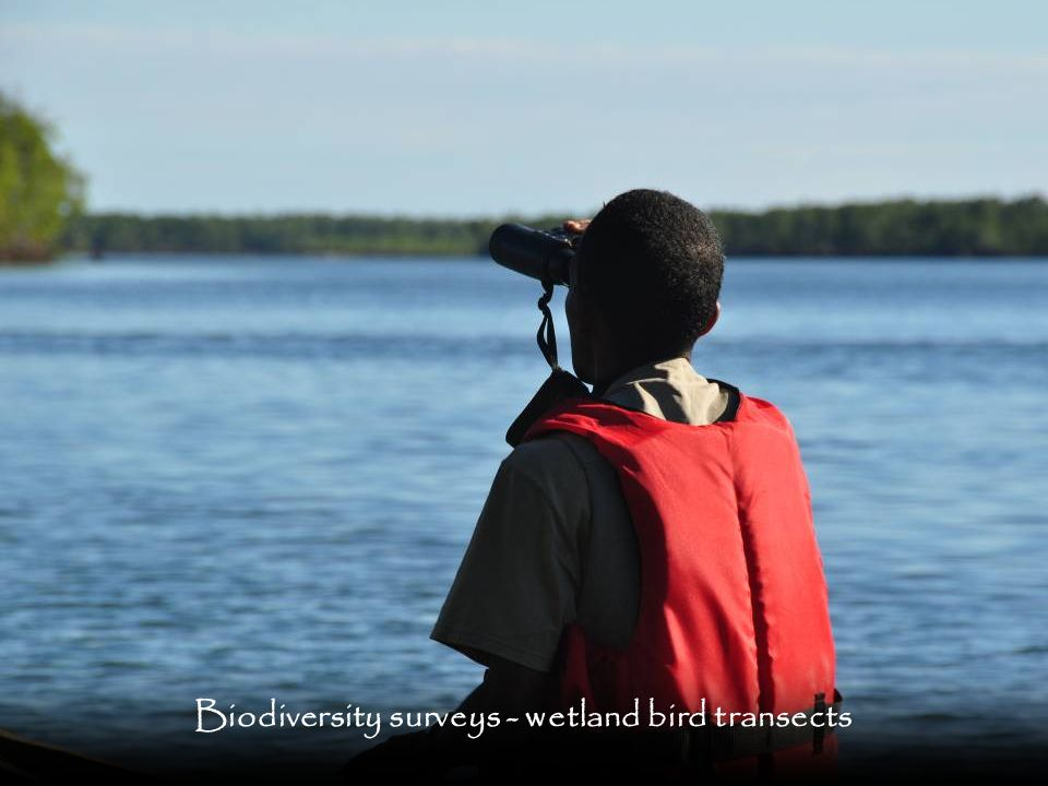 Biodiversity surveys - wetland bird transects