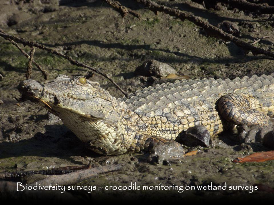 Biodiversity surveys – crocodile monitoring on wetland surveys