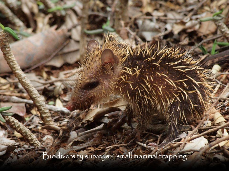 Biodiversity surveys - small mammal trapping