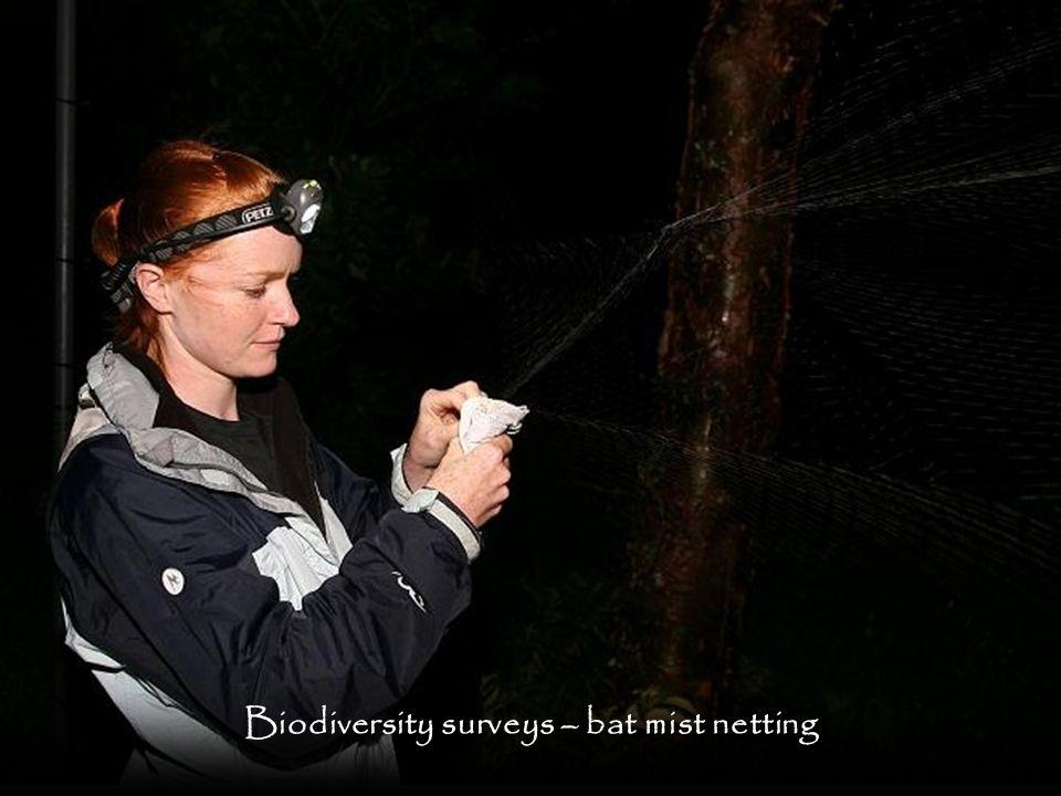 Biodiversity surveys – bat mist netting