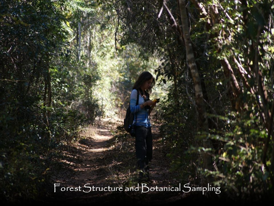 Forest Structure and Botanical Sampling