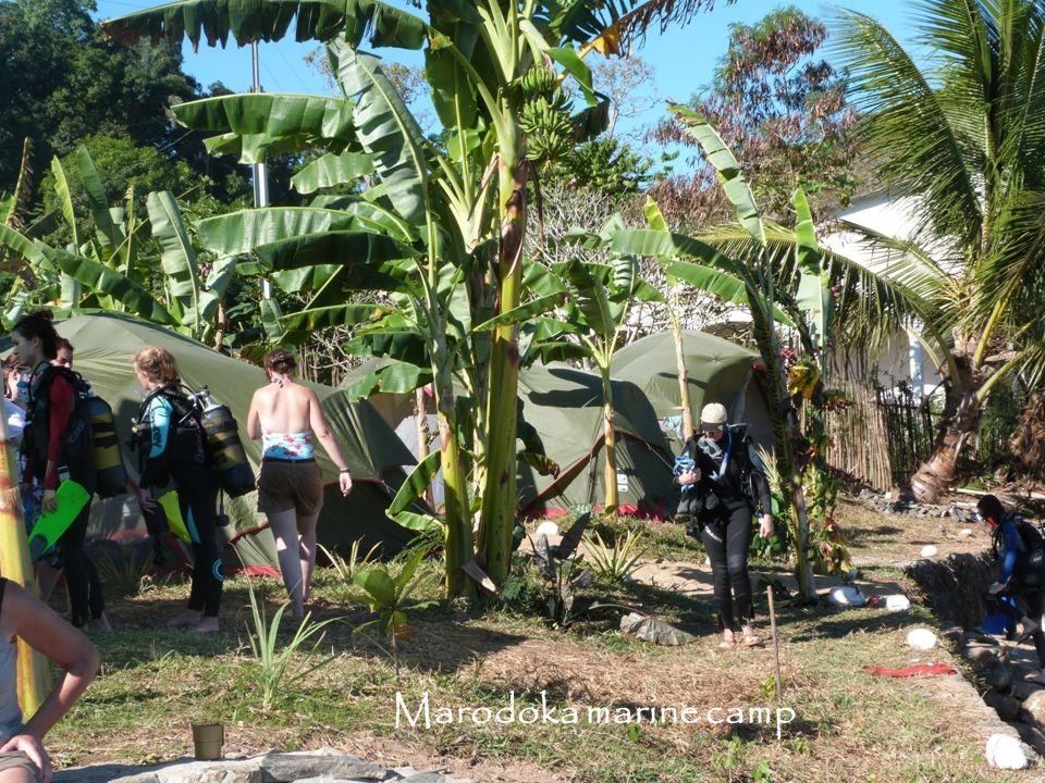 Marodoka marine camp