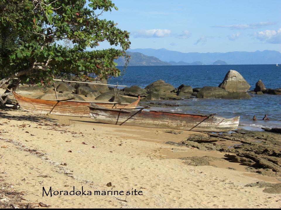 Moradoka marine site