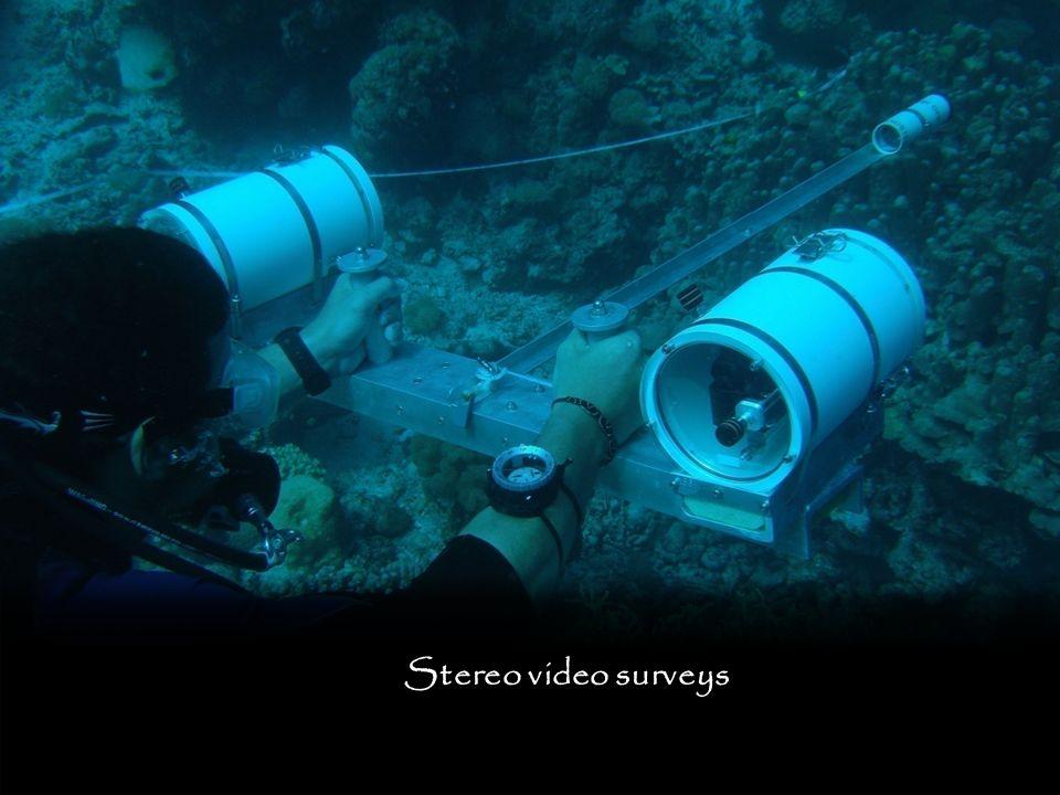 Stereo video surveys
