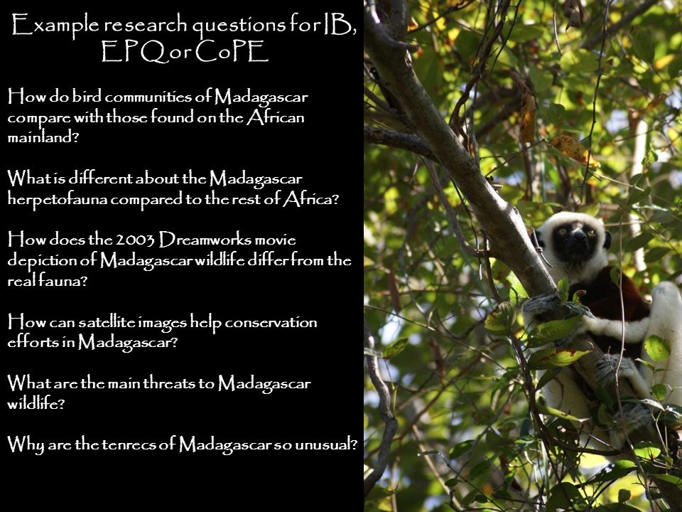 Example research questions for IB, EPQ or CoPE How do bird communities of Madagascar compare with those found on the African mainland? What is differe