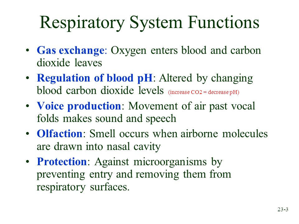 23-3 Respiratory System Functions Gas exchange: Oxygen enters blood and carbon dioxide leaves Regulation of blood pH: Altered by changing blood carbon