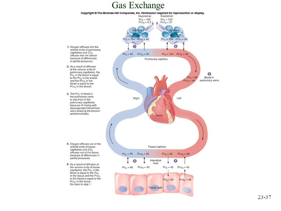 23-37 Gas Exchange