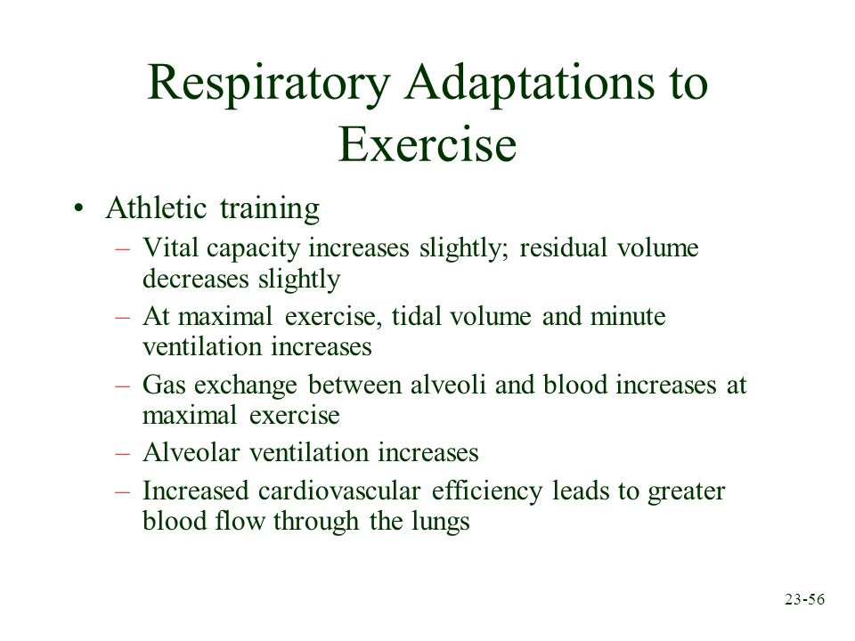 23-56 Respiratory Adaptations to Exercise Athletic training –Vital capacity increases slightly; residual volume decreases slightly –At maximal exercis