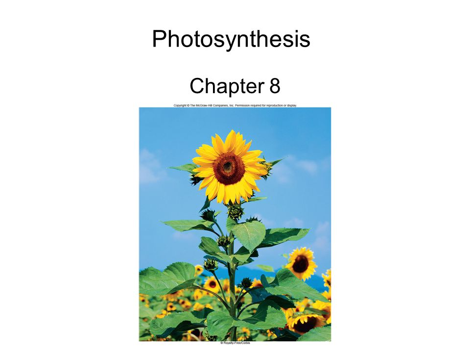 3 Photosynthesis Overview Energy for all life on Earth ultimately comes from photosynthesis 6CO 2 + 12H 2 O C 6 H 12 O 6 + 6H 2 O + 6O 2 Oxygenic photosynthesis is carried out by –Cyanobacteria –7 groups of algae –All land plants – chloroplasts