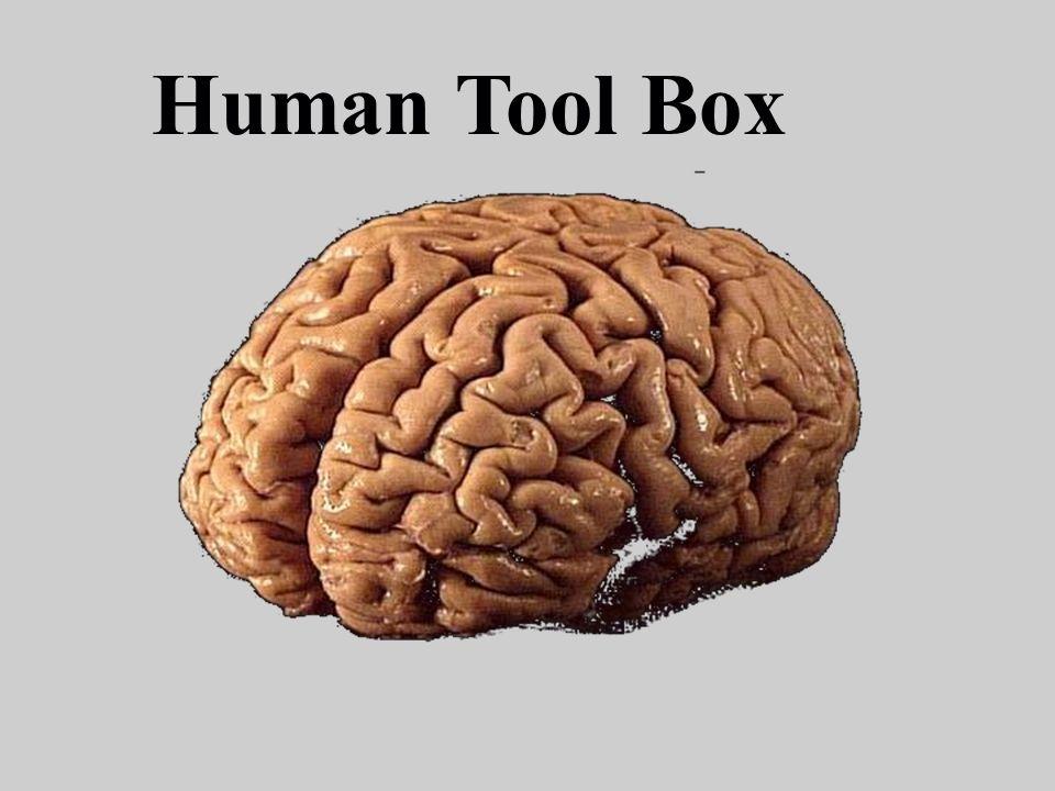 Human Tool Box