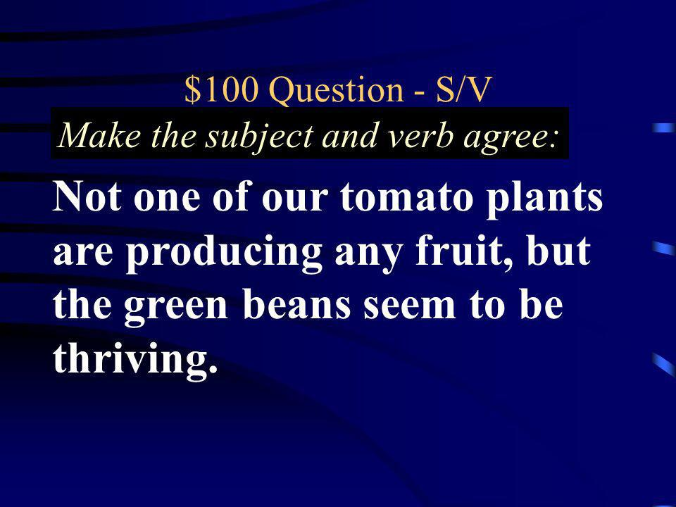 $100 Question - S/V Not one of our tomato plants are producing any fruit, but the green beans seem to be thriving. Make the subject and verb agree: