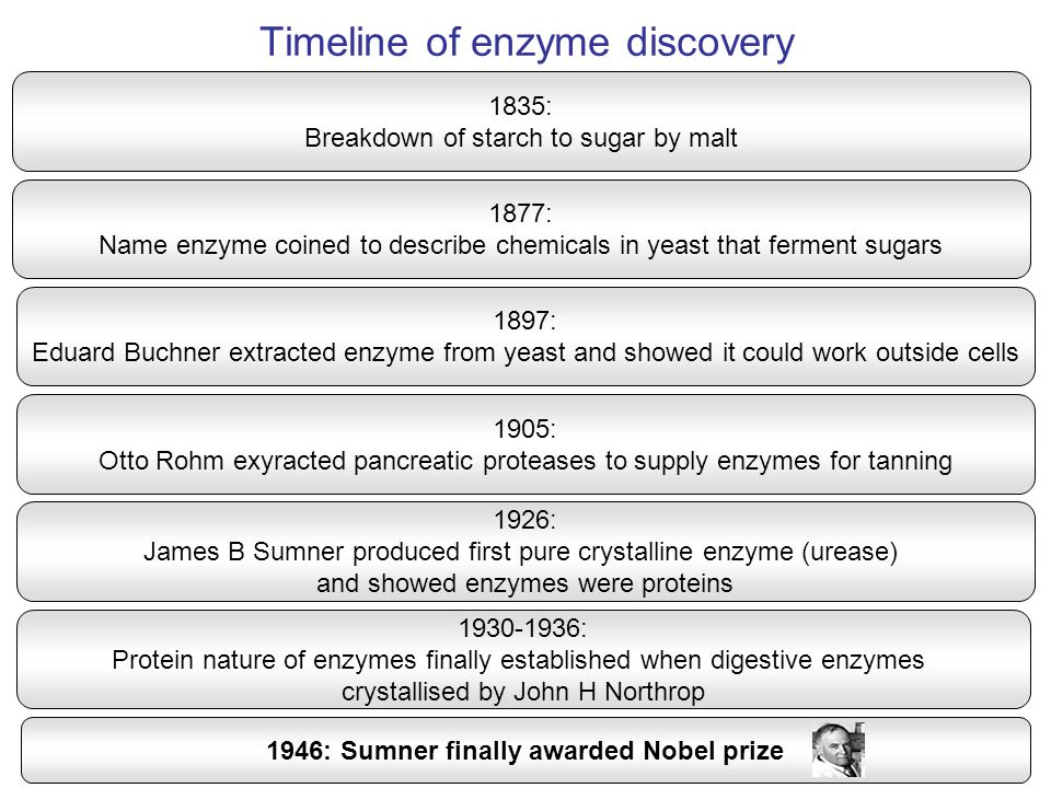 Enzymes lower the activation energy of a reaction Final energy state of products Initial energy state of substrates Activation energy of uncatalysed reactions Activation energy of enzyme catalysed reaction Progress of reaction (time) Energy levels of molecules