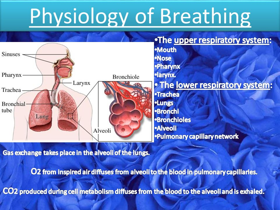 Physiology of Breathing