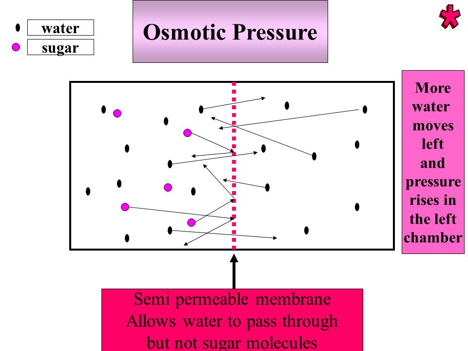 Osmotic Pressure water sugar Semi permeable membrane Allows water to pass through but not sugar molecules More water moves left and pressure rises in