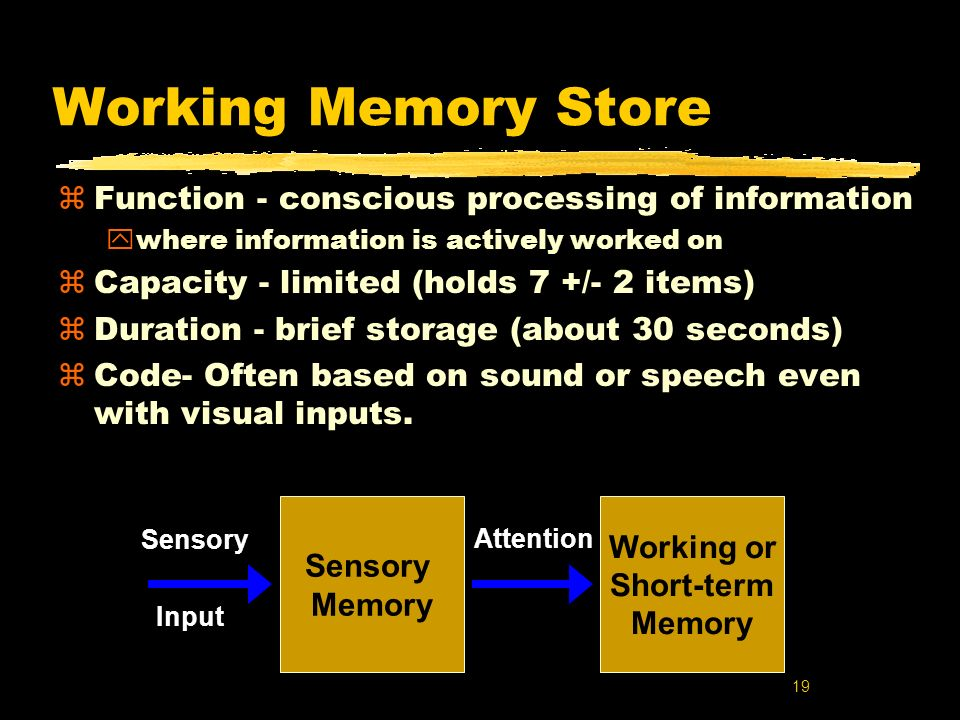 19 Working Memory Store zFunction - conscious processing of information ywhere information is actively worked on zCapacity - limited (holds 7 +/- 2 it