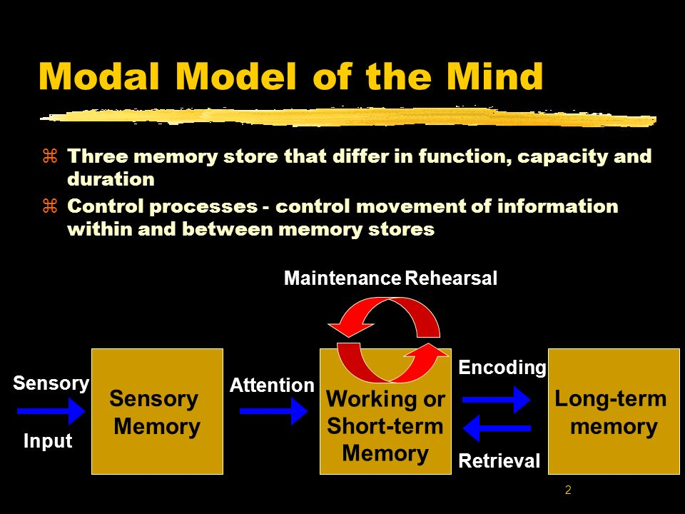 2 Modal Model of the Mind zThree memory store that differ in function, capacity and duration zControl processes - control movement of information with