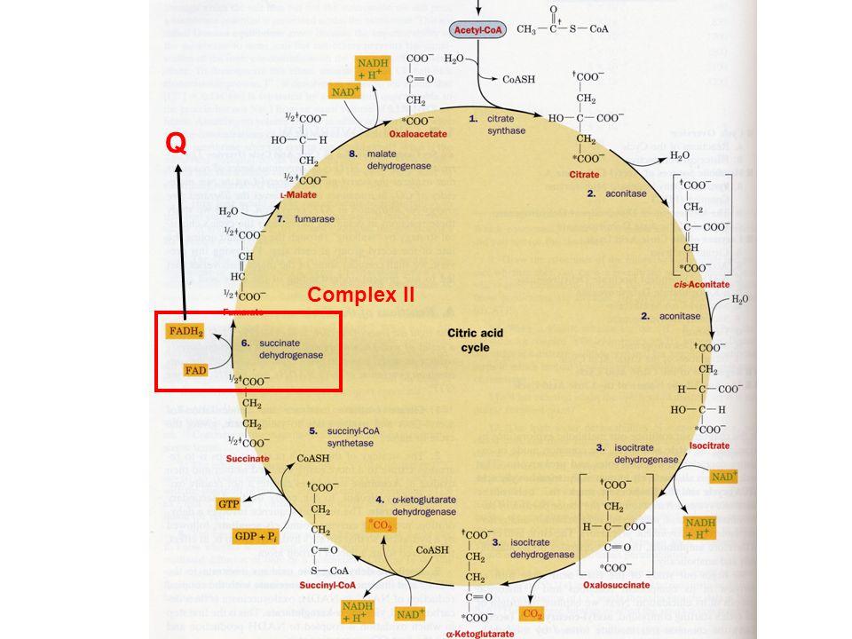 Complex II Q