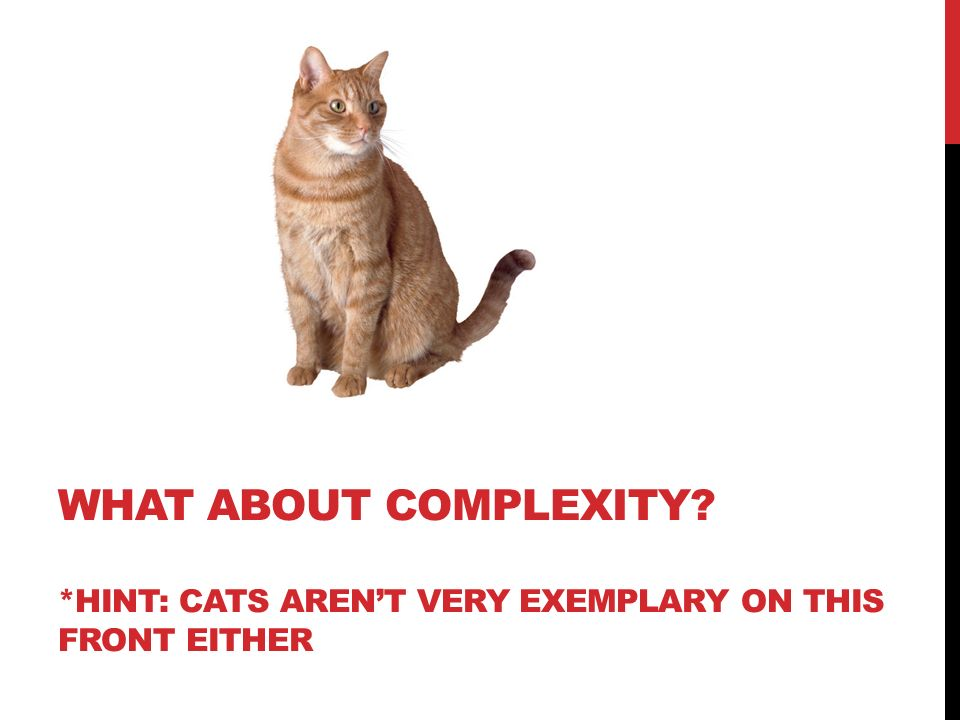 WHAT ABOUT COMPLEXITY? *HINT: CATS ARENT VERY EXEMPLARY ON THIS FRONT EITHER