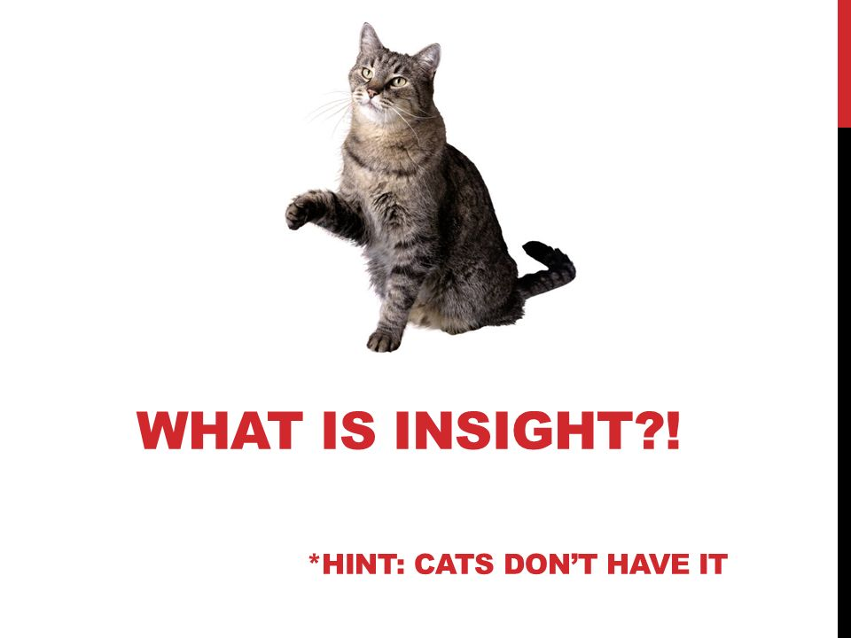 WHAT IS INSIGHT?! *HINT: CATS DONT HAVE IT
