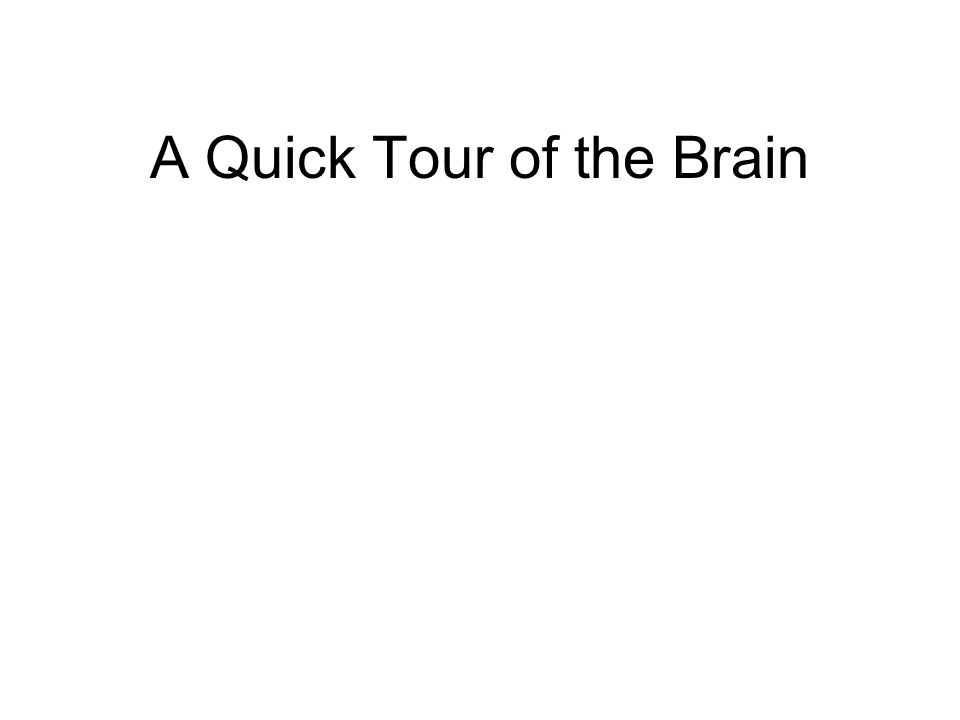 A Quick Tour of the Brain